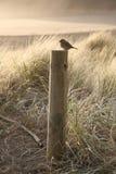Fågeln sitter på en stolpe vid kusten Royaltyfri Bild