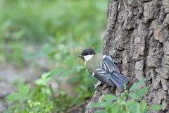 Fågel på en tree Arkivfoto