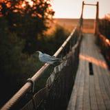 Fågeln sitter på räcket av bron royaltyfria bilder
