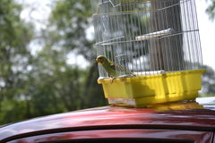 Fågeln som fick frihet Royaltyfria Bilder