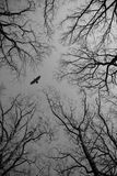 Fågeln som flugan i himlen ser, förgrena sig igenom royaltyfri fotografi
