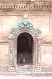 Fågeln står i dörröppning av den hinduiska templet, Kirtipur, Nepal royaltyfri bild