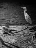 Fågeln stirrar ljuset Arkivbild