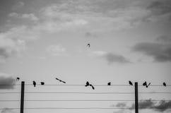 Fågeln väntar tp-flugan Fotografering för Bildbyråer
