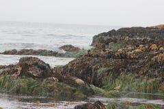 Fågeln vaggar, Pebble Beach, 17 mil drev, Kalifornien, USA Arkivfoto