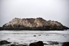 Fågeln vaggar, Pebble Beach, 17 mil drev, Kalifornien, USA Royaltyfri Foto