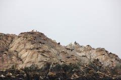 Fågeln vaggar, Pebble Beach, 17 mil drev, Kalifornien, USA Royaltyfri Bild