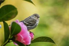 Fågeln vilar på en blomma royaltyfri fotografi