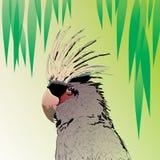 Fågelpapegoja Arkivfoto