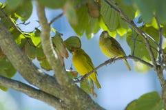 fågelpar s Royaltyfria Foton