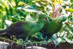 Fågelpar som sätta sig på för att fatta royaltyfri fotografi