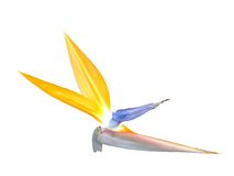 fågelparadis Royaltyfri Foto