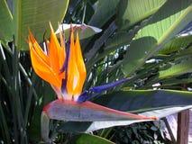 fågelparadis Royaltyfri Fotografi