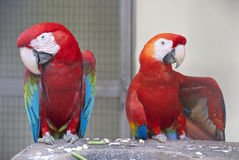FågelPark i Kuala Lumpur Royaltyfri Fotografi