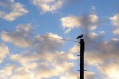 Fågelpol Arkivbild