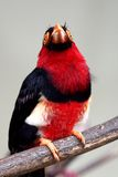 fågelred royaltyfri foto