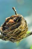 Fågelrede Arkivbild