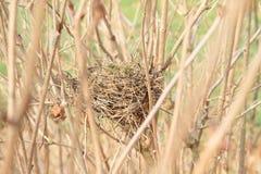 Fågelrede i buske royaltyfria bilder