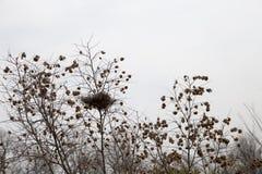 F?gelrede i filialer f?r en buske fotografering för bildbyråer