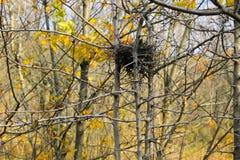 Fågelrede i höstskog arkivbilder