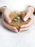 Fågelrede i hand Arkivfoto