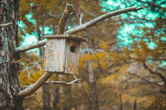 Fågelrede i natur royaltyfri bild
