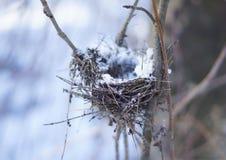 Fågelrede i skogen royaltyfria bilder