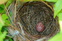 Fågelrede med ett ägg royaltyfria foton