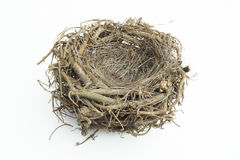 Fågelrede med isolerad bakgrund Arkivbild