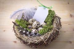 Fågelrede på en tabell med ägg och fjädern arkivbilder
