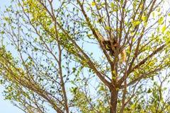 Fågelrede på tree Royaltyfri Fotografi