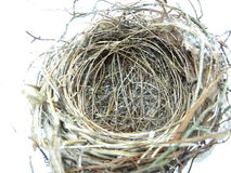 fågelrede s Royaltyfri Fotografi