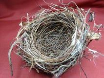 fågelrede s Royaltyfria Foton