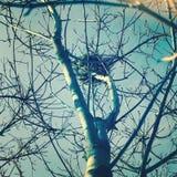 fågelrede s Arkivfoton