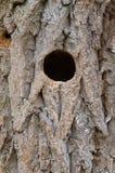 Fågelredehål i trädstam Arkivfoton