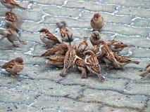 fågelreportage Arkivbild