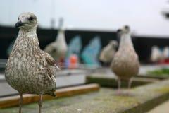 fågelrooftop Arkivfoto