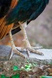Fågels ben arkivbilder
