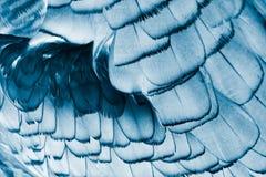 Fågels fjäderdräktbakgrund royaltyfri bild