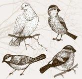 Fågelsamling Fotografering för Bildbyråer
