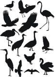 fågelsamling Arkivbilder