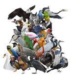 Fågelsamling som isoleras på vit fotografering för bildbyråer