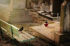 Fågelsammanträde på den gamla stengravvalvet på grav på forntida kyrkogård royaltyfria foton
