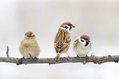 Fågelsammanträde på en filial i parkera och att se in i avståndet Royaltyfri Bild