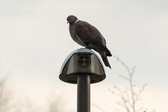 Fågelsammanträde på en lampa Arkivfoton