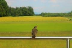 Fågelsammanträde på ett staket royaltyfria bilder
