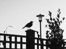 Fågelsammanträde på ett staket Royaltyfri Bild