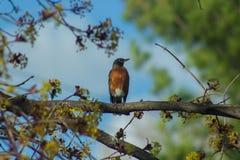 Fågelsammanträde på trädfilial royaltyfri bild