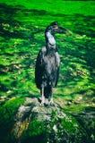 Fågelsammanträde på trädfilial i tropisk skog eller djungel royaltyfria foton