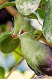 Fågelsammanträde på trädfilial parkerar in arkivbild